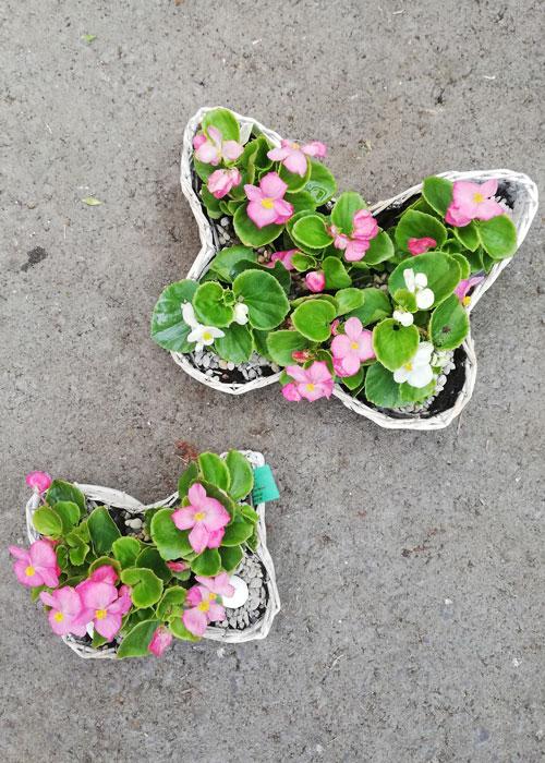 Blumen im Schmetterlings-Korb